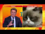 Video: conductor de noticiero australiano entrevistó al 'grumpy cat' y no pudo contener la risa - Noticias de star wars