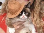 ´Grumpy Cat´ presente en los MTV Movie Awards 2014 - Noticias de mundialmente