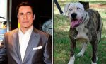 Facebook: foto del perro John Travolta es viral - Noticias de saturday night fever