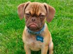 Earl, la competencia canina de Grumpy Cat - Noticias de the wanted