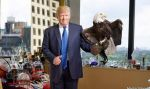 En video YouTube el ataque de águila a Donald Trump en plena sesión de fotos - Noticias de revista time